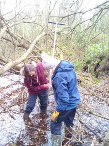 Volunteers surveying for Retting pits