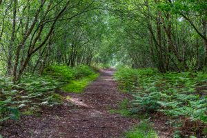 Nature on the Isle - Forest path