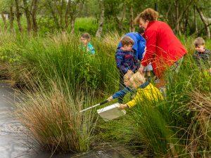 Pond dipping with school children - children having a go