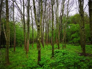 The landscape at Thorne Community Wood