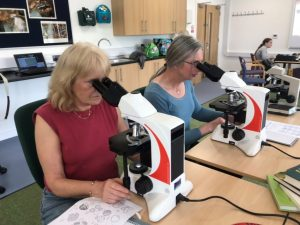 Volunteers looking at pollen with microscopes